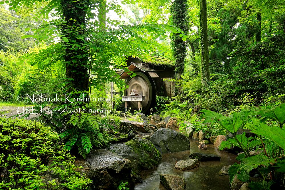 7月 京都府立植物園