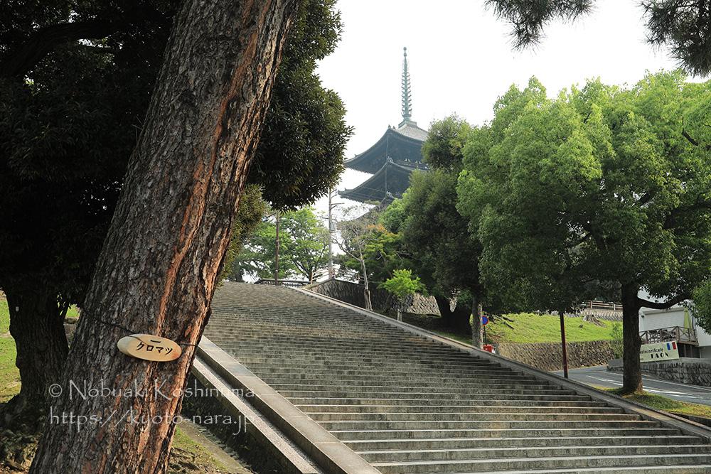興福寺 五重塔 五十二段