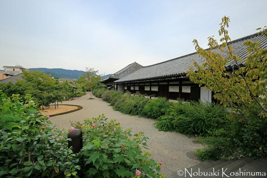 元興寺 萩の花