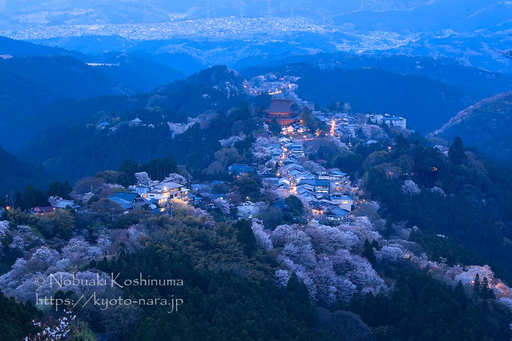 吉野 桜 世界遺産 上千本