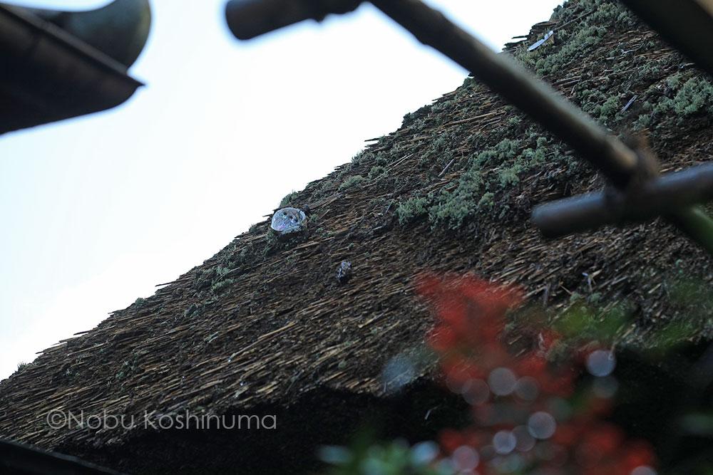 奈良 依水園 日本庭園奈良 依水園 日本庭園
