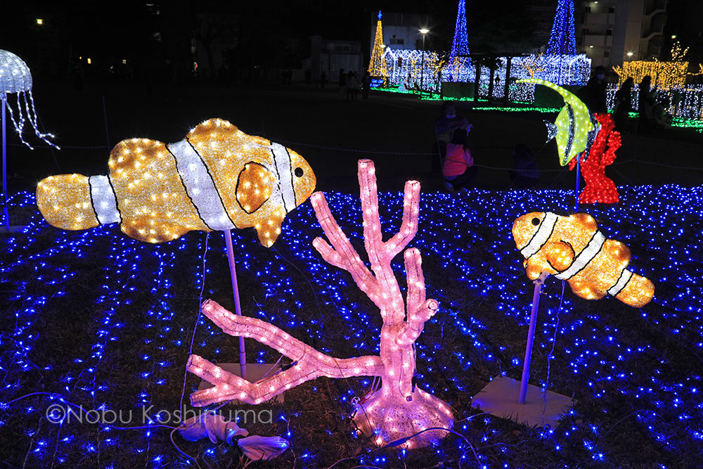 天理市 光の祭典 田井庄池公園