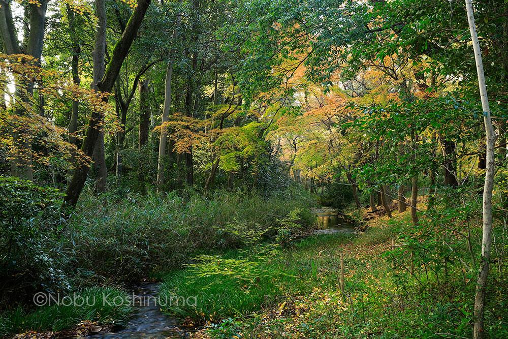 下鴨神社 糺(ただす)の森