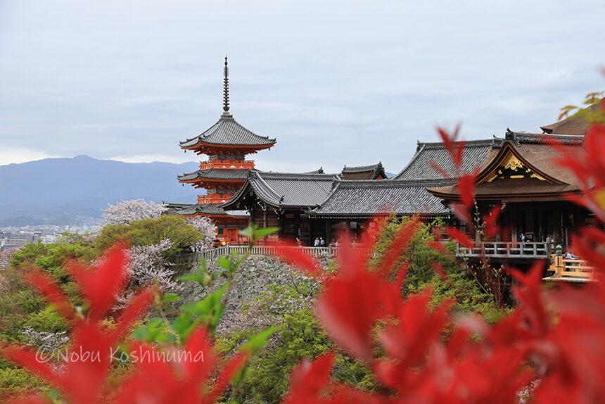 清水寺 世界遺産 三重塔 本堂