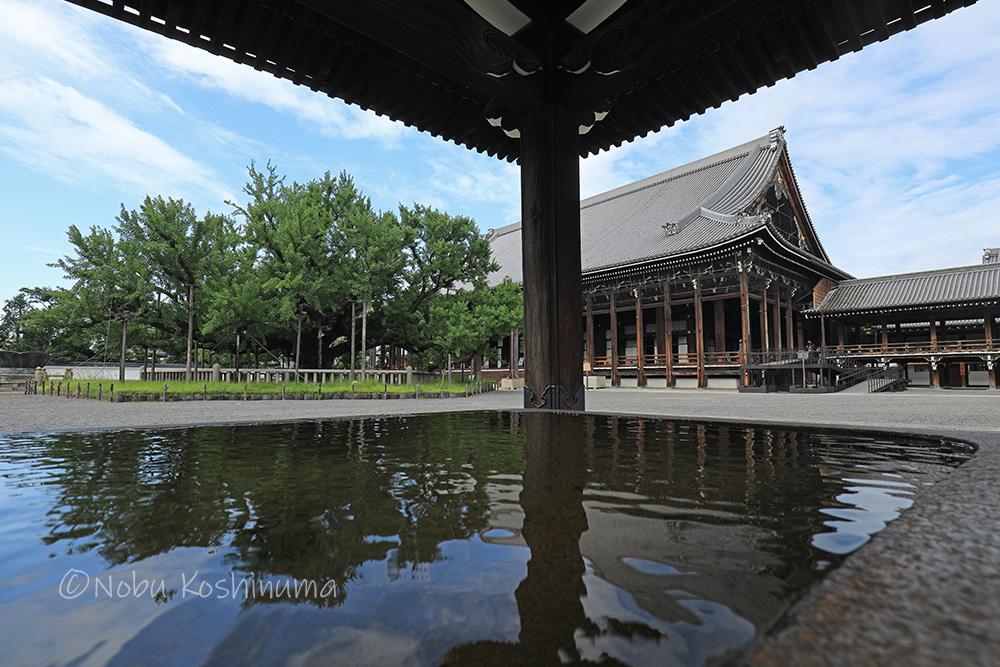 西本願寺 国宝建造物 御影堂 イチョウ 樹齢400年