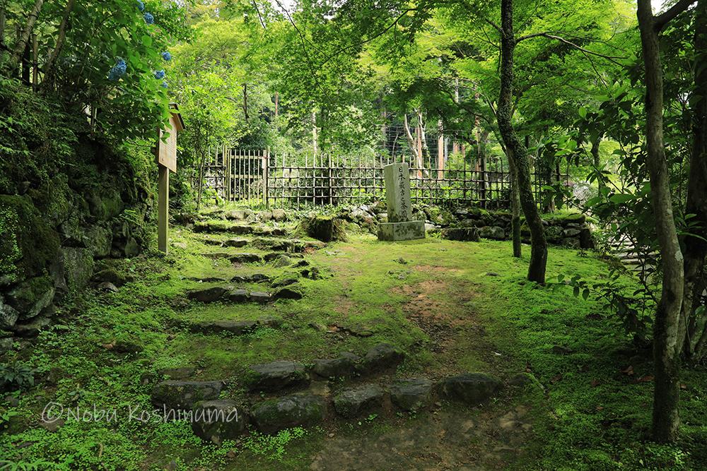 高山寺 世界遺産 日本最古之茶園