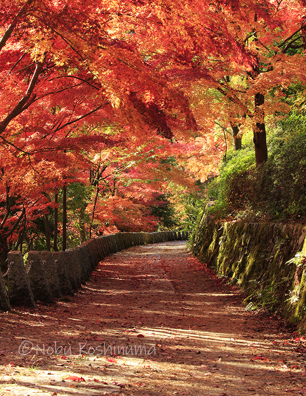 吉野山 紅葉