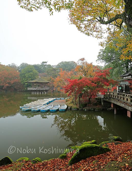 奈良公園 浮御堂 紅葉